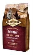 CarniLove - Сухой корм для активных кошек (северный олень) Adult Energy & Outdoor Reindeer